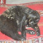 Mimi the Riad cat