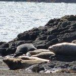 isolotto delle foche