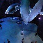 Bei den Walen