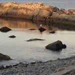 Rock Beach of Brigus
