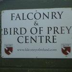 Falconry Ireland