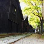 ケヤキ並木と倉庫2