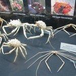 Distintos cangrejos