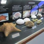 Erizos, estrellas marinas