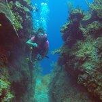 swim through the reef