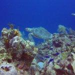 sea turtles to swim with.