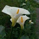 Flower;lawn