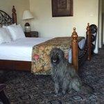 Olive the Wonderdog is very Impressed!