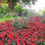 公園内の花