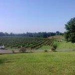 Stony Knoll Grounds