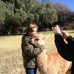 Loving the lamas at Patios de Cafayate