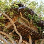 Bungalow sull'albero