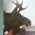 The moose on the wall