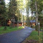 Романов лес