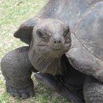une tortue terrestre
