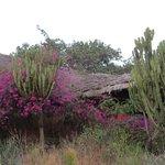 Beautiful even in dry season