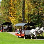 Fall Carriage Ellk Viewing Rides