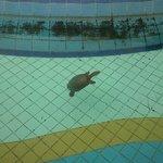 Tortoise in water body