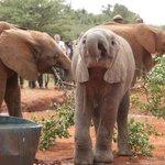David Sheldrick Wildlife Trust