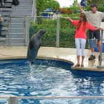 The seal show.