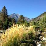 Organic Garden Views