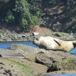 One of the baby seals in the area showing off.