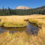 Upper Kings Creek Meadow