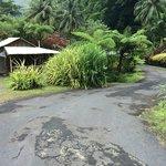 Photo de Natty Tropical Valley