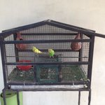 The parakeets