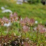 高山植物もきれいに撮れました。