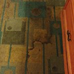 Carpet in motel room was filthy