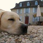 Frankie the dog.!