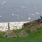 "View of the ""fou de bassan"" (Birds of Bonaventure island)"
