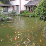 Koi fish pond adjacent to the hotel restaurant