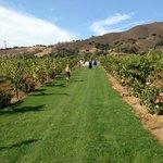 Kirigin Cellars Winery