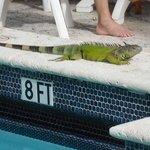Cool visitors at teh pool