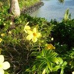 Plants along the beach