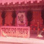 Halloween Exotic Bird Show
