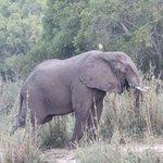 Elefanten an beiden Ufern