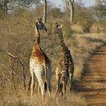 Safari al tramonto