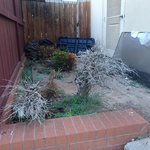 Flower bed/Landscaping