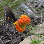 Butterflies in the butterfly gardens