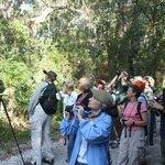 Dauphin Island Audubon Bird Sanctuary