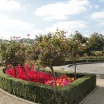 Rose Garden at the Radisson Blu