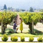 Kelham Vineyards