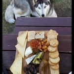 Blue the Wolf Dog joined us for lunch