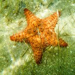 Starfish I saw at Mosquito Pier while snorkeling