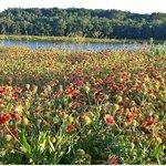 Spring at Oak Point Nature Preserve