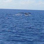 Whale off Aitutaki