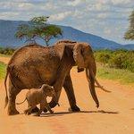 Mama Elephant and Toto